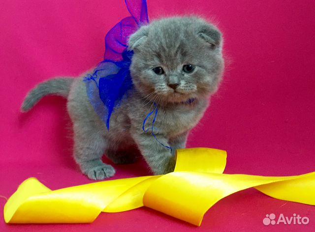 К чему снится подарок котенка 1
