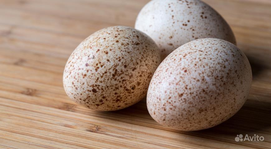 Яйца индюшинные
