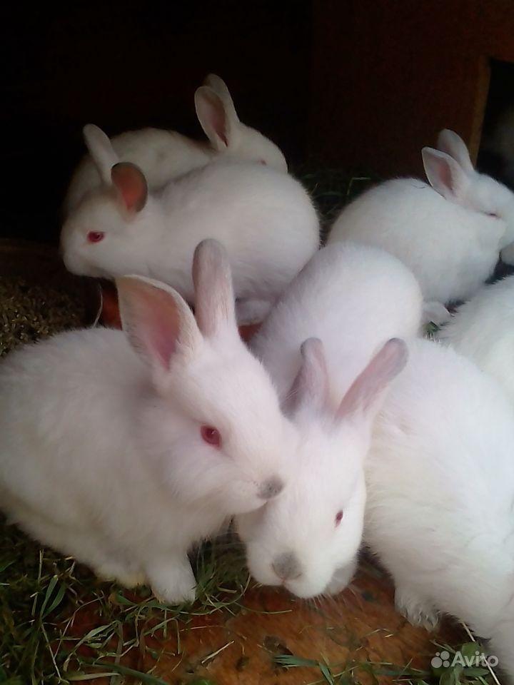 Крольчатки
