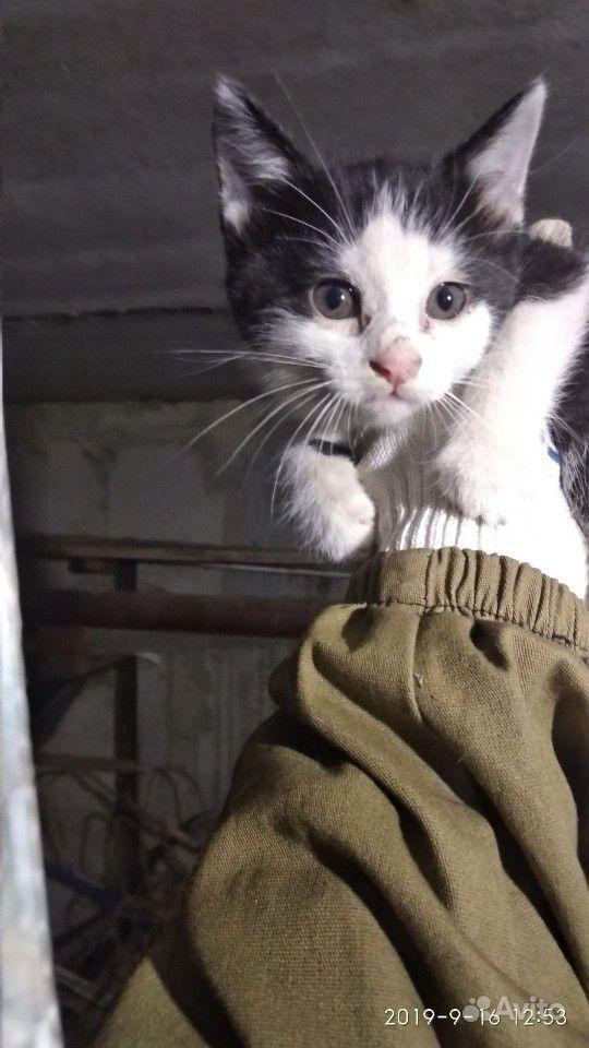 Крошка-кошка