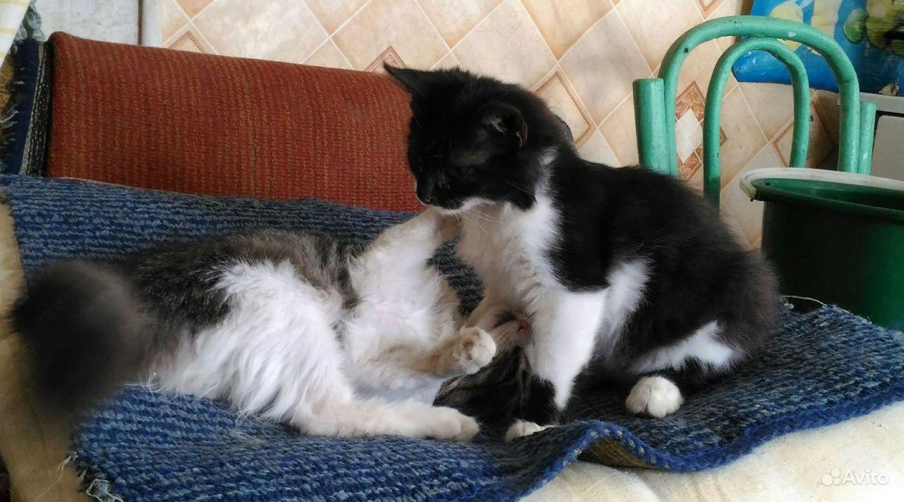Котята, в добрые руки - фотография № 3