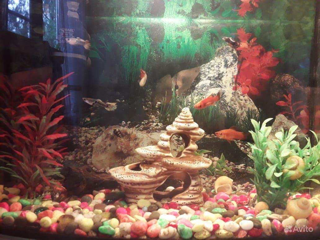 Аквариум с рыбками 25 литрой купить на Зозу.ру - фотография № 1