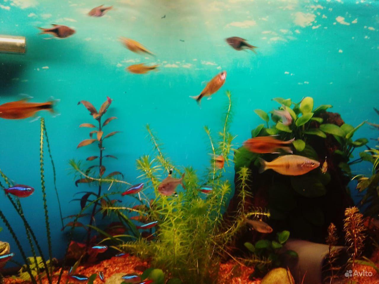 3 аквариума купить на Зозу.ру - фотография № 8