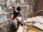 Продам котенка 8 месяцев