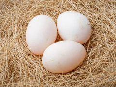 Яйцо индейки домашней инкубационное: