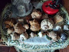 Морские ракушки натуральные
