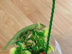 Ваза-бокал (аквариум) на 1,8 литра