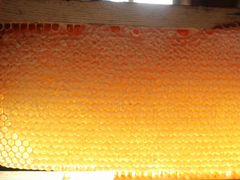 Мёд сотовый на рамочках