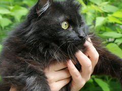 Котик Матвей