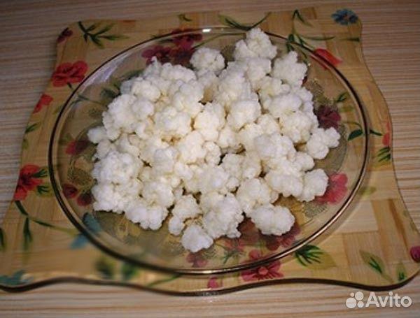 Молочный гриб для похудения Худеем при помощи