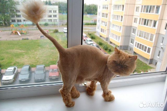 Стрижка кошек в лисках