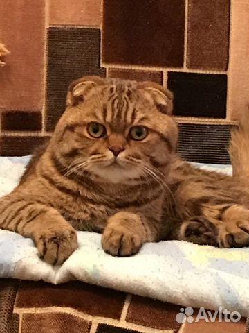 Авито иваново коты
