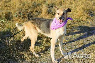 Необыкновенная собака в дар купить на Зозу.ру - фотография № 6