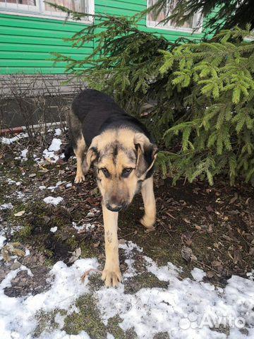 Большой щенок в добрые руки купить на Зозу.ру - фотография № 1