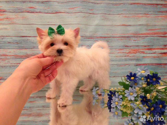 Кукольный белый супер мини мальчик купить на Зозу.ру - фотография № 3