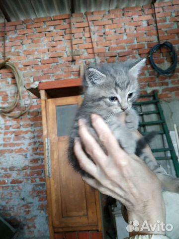 Отдам даром замечательных котят купить 1