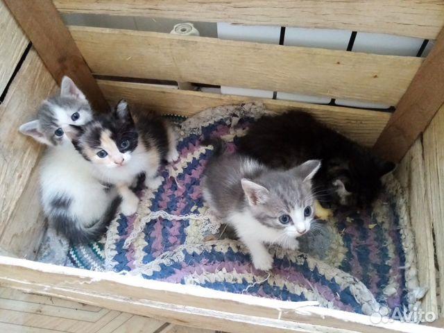 Katze  89371529702 kaufen 1