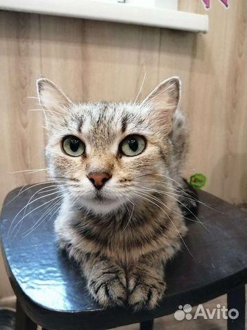 Кошка  89132414283 купить 1