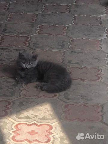 Кошка  89626238676 купить 1