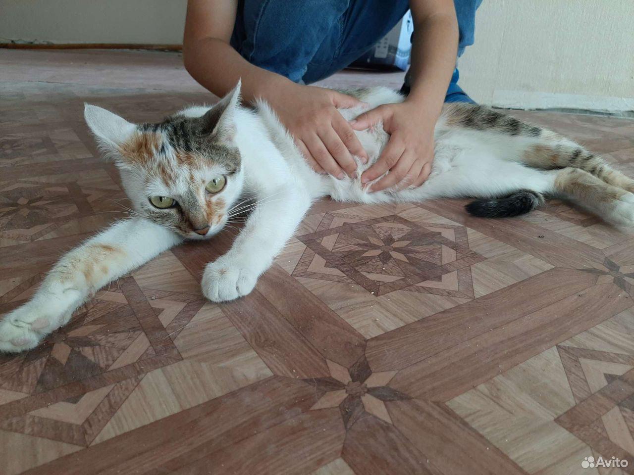 Кошка  89610008181 купить 2