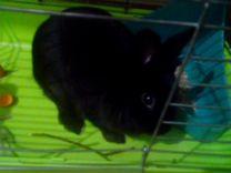 Кролик и клетка
