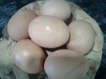 Яйца деревенское