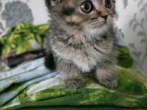 Котик и Кошечки