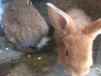 Кроляшки