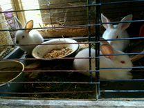 Ризены крольчата от месяца до 5