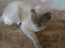 Коты 3 видов, спаривание