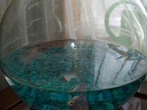 Петушок с круглым аквариумом