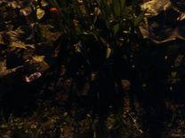 Цветы со своего участка