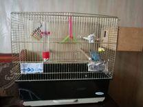 Волнистые попугаи — Птицы в Москве