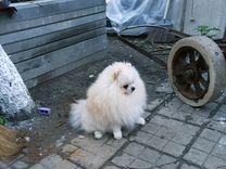 Дарю любовь — Собаки в Геленджике