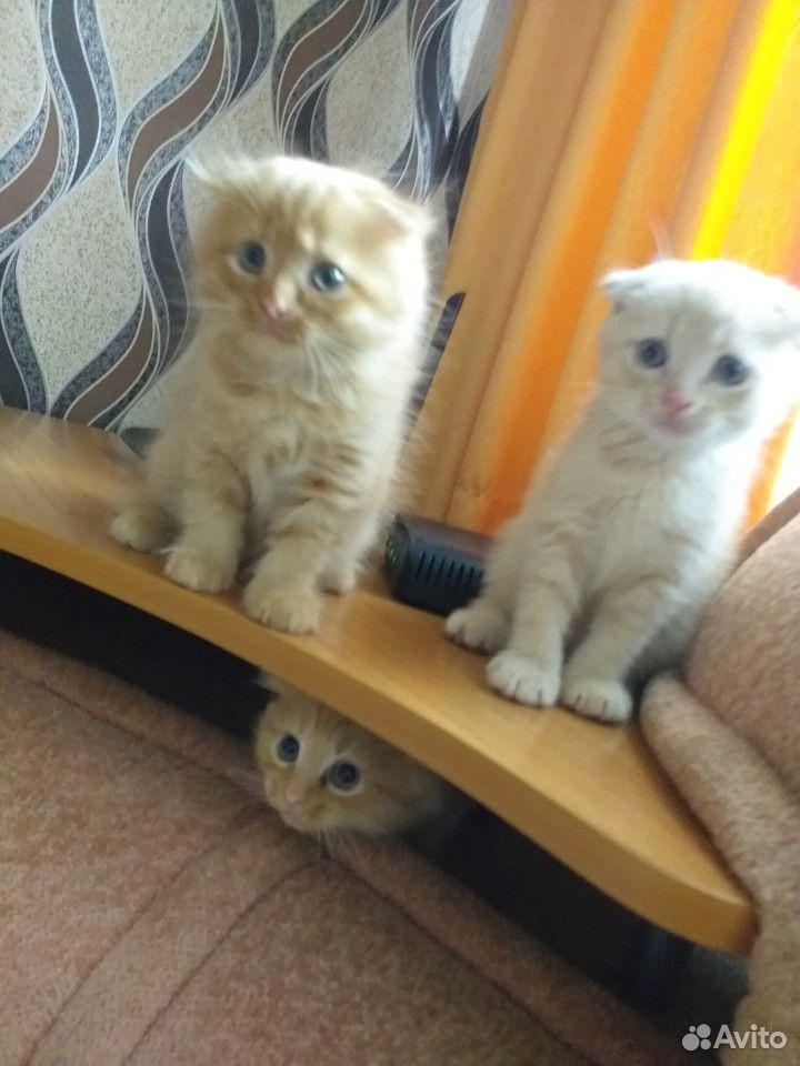 Продаю котят  89228220557 купить 10