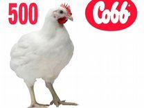Цыплята бройлеры Кобб 500