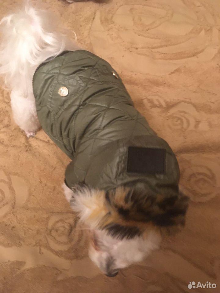 Куртка для собаки petsoo  89191738672 купить 5